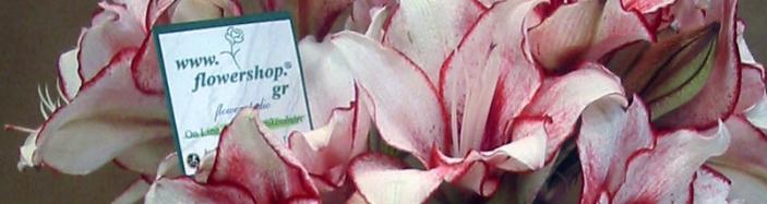 Αμαρυλλίδες σε γυάλινο κυλινδρικό βάζο με χρωματιστό διακοσμητικό ζελέ