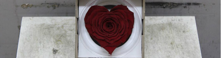 "Rose Big Head (10) cm ""Heart Shape"" !!!"