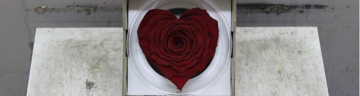 """Τριαντάφυλλο βαλσαμωμένο σε σύνθεση. """"Σχήμα ΚΑΡΔΙΑΣ"""""""