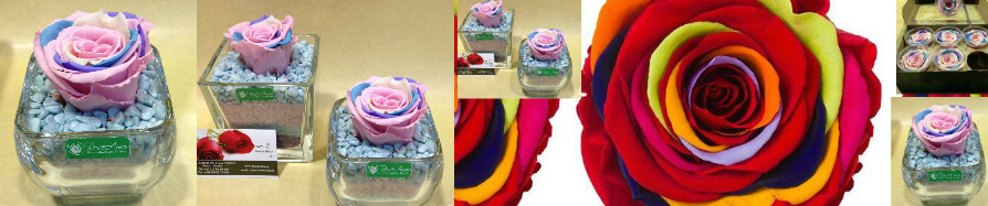 Rainbow Preserved Roses Offer