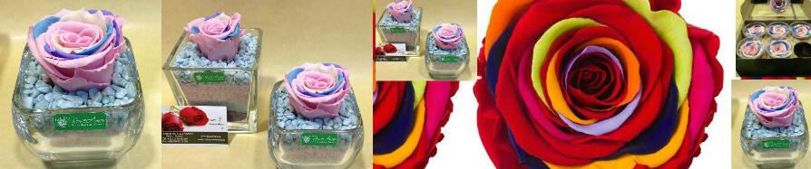 Rainbow  Roses Προσφορά