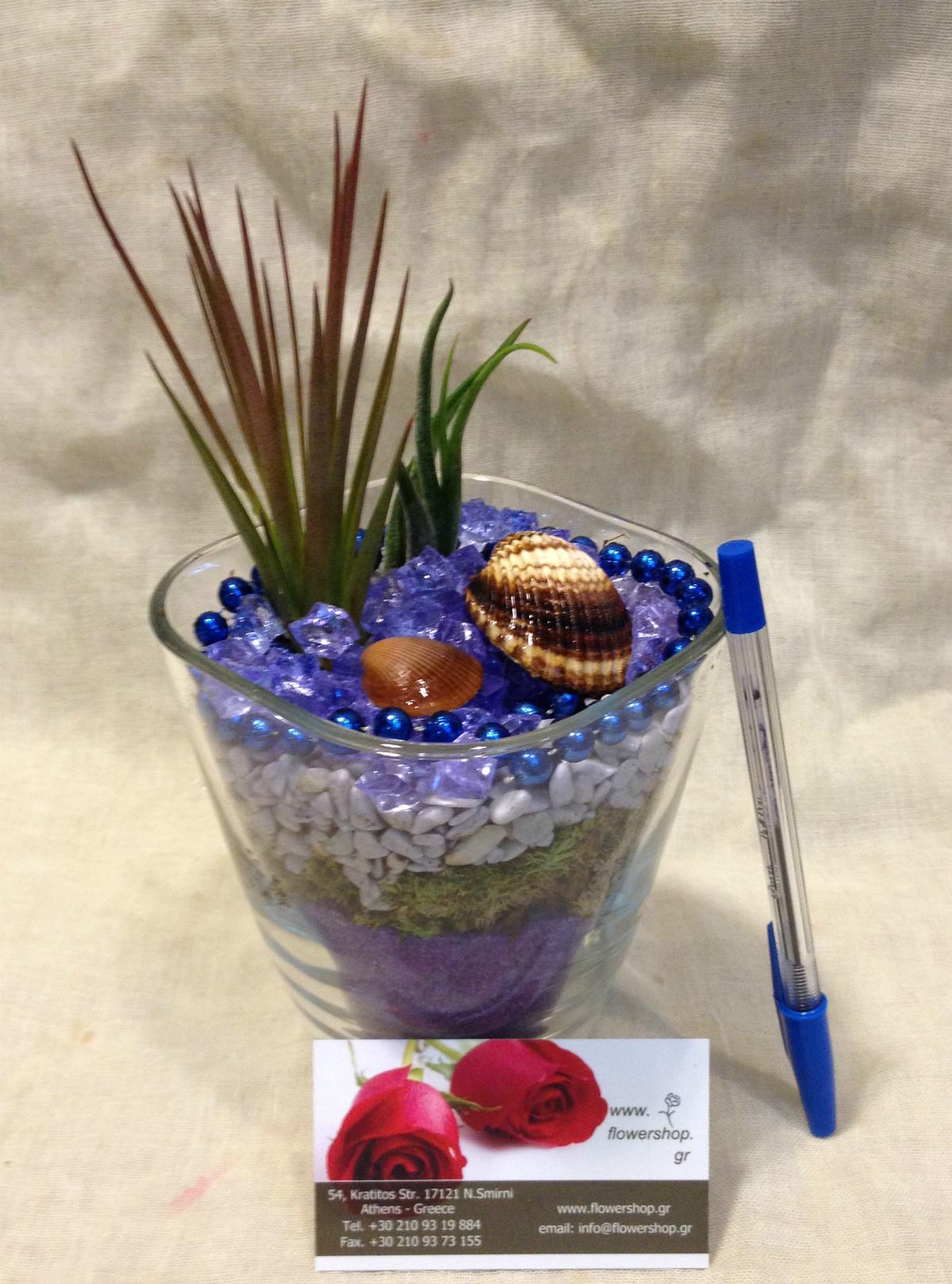 Air plants tillandsias in glass vase blue sky for Air vase