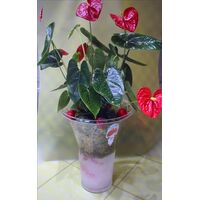 anthurium glass.jpg