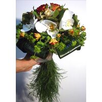 phalenopsis bridal.jpg