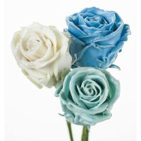 (10) Exclusive Waxed Roses  (random colors) in vase with colored water!!!