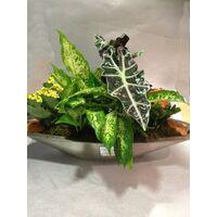 Φυτά Σύνθεση σε μεταλλική γόνδολα !!!