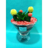 Gymnocalysium Cactus Arrangement In Glass With Decorative Colored Sand !!!