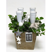 Christmas Plants & Decoration in Quality Pot.