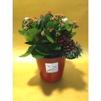 Kalanchoe Plant in Ceramic Pot  & Decoration