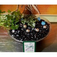 Φυτά σε γυάλινη πιατέλα & Χριστουγεννιάτικη διακόσμηση
