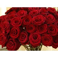 (21) red roses 30-40cm bouquet with green fillings.Extra Quality Dutch .Super week Offer