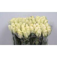 (20) λευκά τριαντάφυλλα