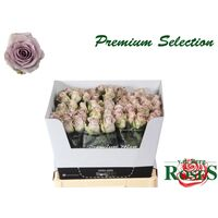 "Roses ""Safi"" Purple"