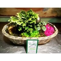 Small Christmas Basket with Plants & Decoration