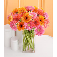Germini - Gerberas Bouquet