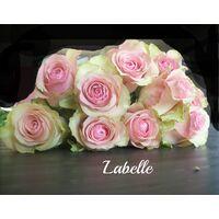 Ανθοπωλείο. Τριαντάφυλλα Labelle !!!