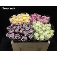 (10) Exclusive Frosted Waxed  Roses
