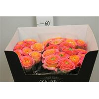 "Exclusive ""Houdini""  (11) stems Roses"