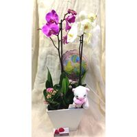 Arrangement  with Orchids + Plants In Artstone Pot + Accessories