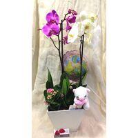 Arrangement  with Orchids + Plants In Artstone Pot + Accessories