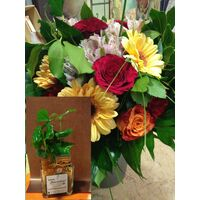 Season Flowers Bouquet + Coffea Plant in Quality Pot !!!
