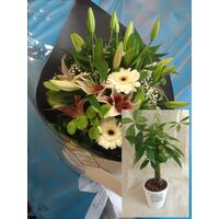 Season Flowers Bouquet + Pahira Plant in Quality Pot !!!