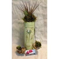 Air Plants tillandsias in Ceramic Design Vase With Hanging Snail Shells Planted Along. Exclusive !!!
