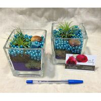 Air Plants tillandsias in glass vases.Blue sky !!! (pair 2 vases)