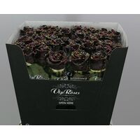 "Exclusive ""Chocolate Waxed""  Roses (10)p. In Vase Arrangement!!! NEW!!!"