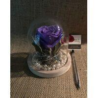 """Τριαντάφυλλο βαλσαμωμένο (1) Τεμ. σε σύνθεση. """"Η Πεντάμορφη & Το Τέρας """""""