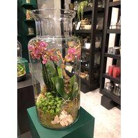 Σύνθεση Με Φυτά Σε Μεγάλο Γυάλινο Βάζο Διαμ. 25εκ & Ύψος 55εκ. Με εσωτερική διακόσμηση.