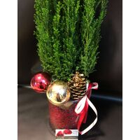 Conifer tree in glass cylinder with decoration and gel. Vase diam 15cm height 20cm. Plant height 50cm