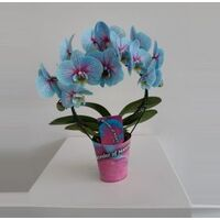 "Phalaenopsis ""Blue Wonder"" In Vase or Ceramic Pot !!!  Fascinating !!!"