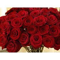 (31) Κόκκινα Τριαντάφυλλα 30-40εκ. Μπουκέτο με πρασινάδες !!! Προσφορά Εβδομάδας (Ολλανδικής Προέλευσης)