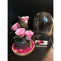 "Roses Preserved in ""Glass Fanus"" Diam 17 cm Height 24 cm . Romantic Pink (4) heads."