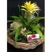 Easter Decorated Plants In Big Quality Basket !!! (components may vary)