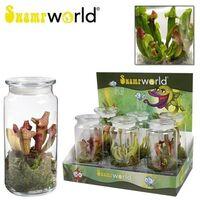 Φυτό  σαρκοφάγο (διάφορες ποικιλίες/1 φυτό) σε γυάλινο βάζο ή κεραμικό ποτ με διακόσμηση !!! (Διωναία κ.α)