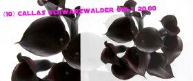 Ανθοπωλείο Κάλλες Schwarzwalder ! Οι Αυθεντικές Μαύρες !