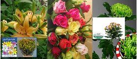 Δροσερά Λουλούδια ! Σουπερ Προσφορά 39,99 €
