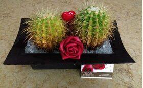 Arrangement with cactus