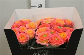 """Exclusive """"Houdini""""  (11) stems Roses"""