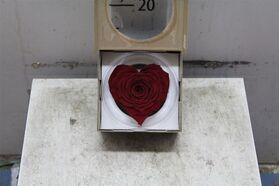 """Τριαντάφυλλο βαλσαμωμένο σε σύνθεση. Φυσικό μεγάλο κεφάλι (10 cm) επεξεργασμένο!!! Νέο Είδος !!! """"Σχήμα ΚΑΡΔΙΑΣ"""""""