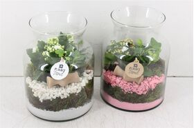 Σύνθεση με φυτά σε γυάλινο βάζο Alsey ύψ.30εκ διαμ.16εκ. με διακόσμηση !!! (3) φυτά.