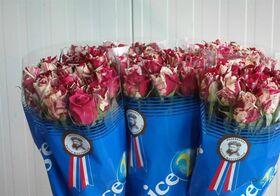 """Τριαντάφυλλα """"Harlequin""""( 21) τεμ. Μπουκέτο. Νέο !!!"""