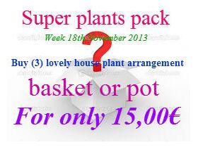 Φυτά σε καλάθι