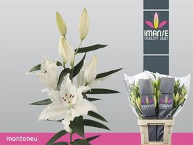 """Lillies """"Oriental"""" gift wrapped."""
