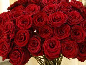 (41) Κόκκινα Τριαντάφυλλα Μπουκέτο !!!  Λουλούδια Προσφορές.(Ολλανδικής Προέλευσης)