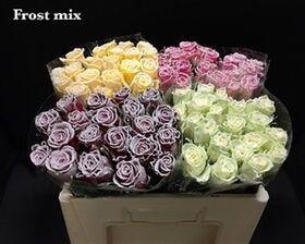 """(10) τριαντάφυλλα  με επικάλυψη """"Κεριού"""" """"Παγωμένα"""""""