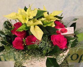 Διάφορα χριστουγεννιάτικα λουλούδια & Αλεξανδρινά σε καλάθι