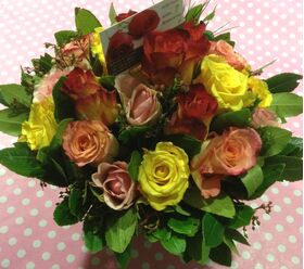 roses in pot extra